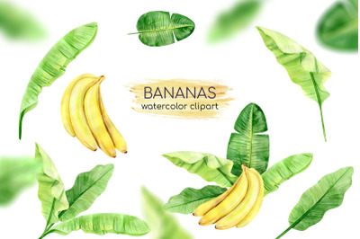 Watercolor Banana Leaves Clipart. Banana Plant. Exotic Greenery