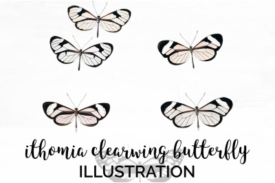 Butterfly Clipart Clearwing