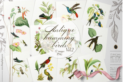 12 Vintage Humming Birds Vol.2 Ephemera Transparent PNG