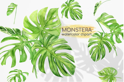 Watercolor Monstera Clipart. Exotic Clipart. Exotic Greenery. Tropical
