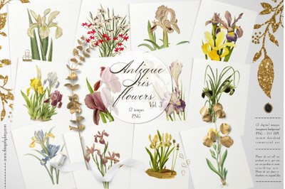 12 Vintage Iris Flower Ephemera Vol.3 Transparent PNG Images