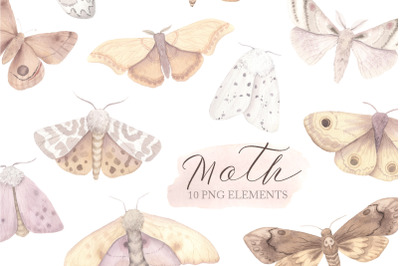 Watercolor Moth Clipart