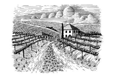 Italian Vineyard and Road