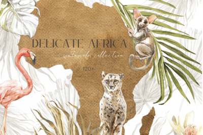 DELICATE AFRICA Watercolor Collection