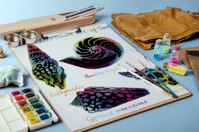 Hand drawn seashells.