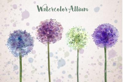 Watercolor Allium Clip Art Set