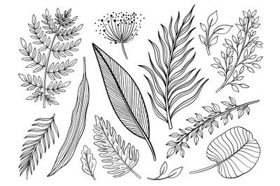 Set plant line drawing