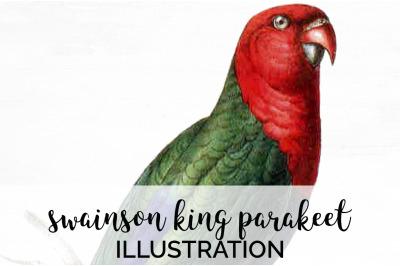 Parrot Parakeet Clipart