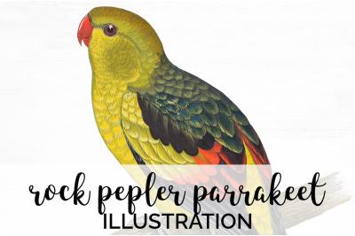 Parrot Parrakeet Clipart