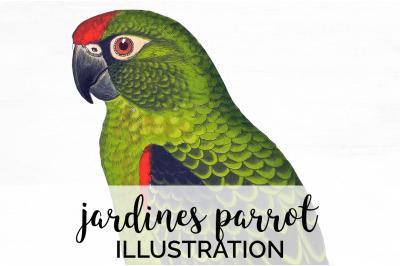 Parrot Clipart Jardines