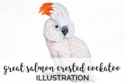 Parrot Cockatoo Clipart