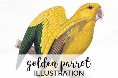 Parrot Clipart Golden