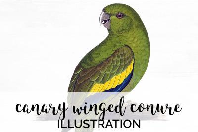 Parrot Conure Clipart