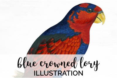 Parrot Lory Clipart