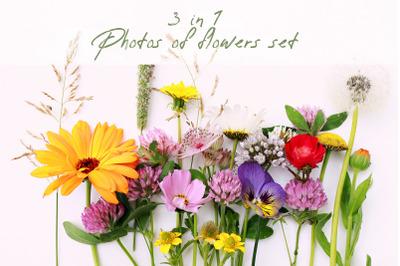 Filed wild cosmos and calendula flowers photo set