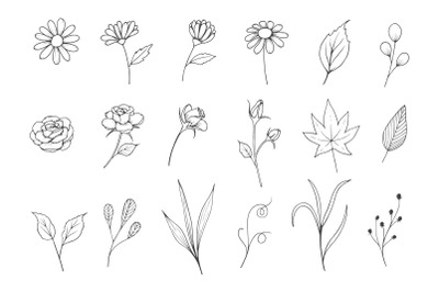 Flowers Sketch  Collection with Line Art Style