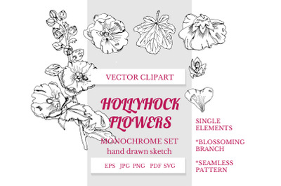 Hand drawn floral. Hollyhock flowers. Mallow plants. Alcea.