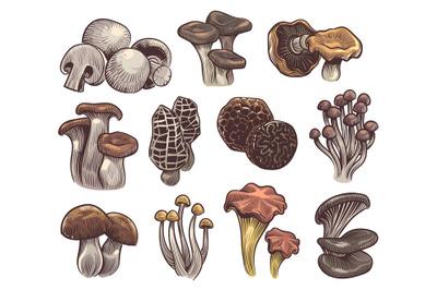 Hand drawn mushrooms. Colorful sketch mushroom champignon and truffle,