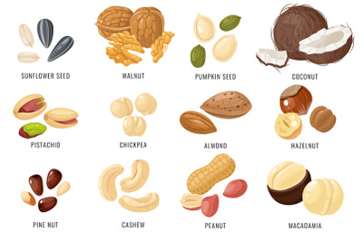 Nuts and seeds. Cashew and hazelnut, almond and coconut, walnut and pe