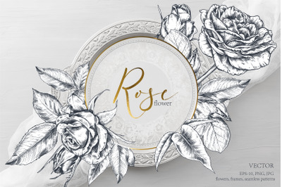 Vector Rose flowers