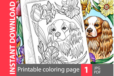 Cavalier King Charles. Coloring page