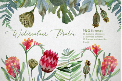 Watercolor Protea set