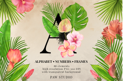 Tropical Graphic Letters Numbers Floral Frames Monogram