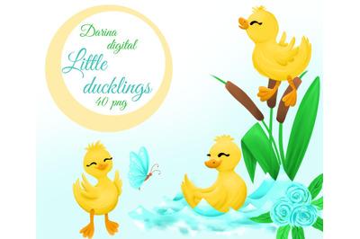 Little duckling clipart