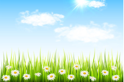 Daisy Flowers and Green Grass