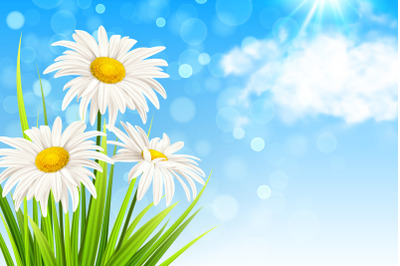 White Daisy Flowers and Green Grass