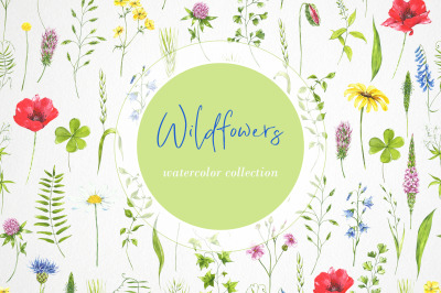 Wildflowers, leaves, plants. Watercolor flowers  clipart.  digital cli