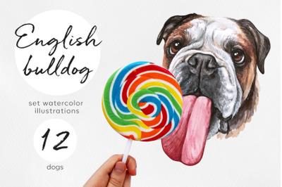 English bulldog. Big watercolor set dog illustrations. 12 dogs