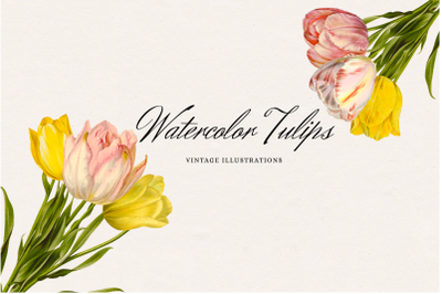 Vintage Watercolor Tulips