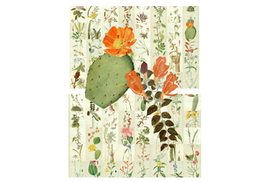 "75 Vintage Bookplate ""Blooming Desert Rose"" Art Images"