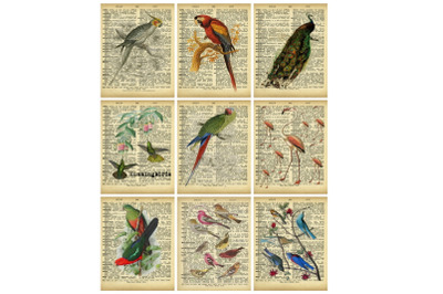 Dictionary Pages Birds Collage Tags