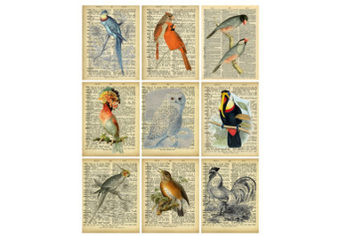 Printable Dictionary Pages Birds Collage 2