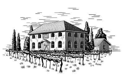 Elegant Vineyard