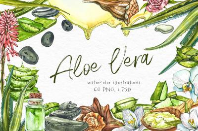Aloe Vera botanical illustrations
