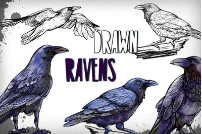 Drawn Ravens