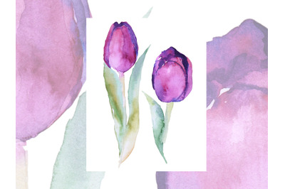 Watercolor two purple tulips sketch