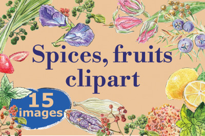 Watercolor spices, fruits, vector
