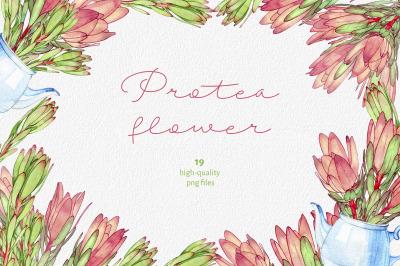 Protea flower watercolor clipart