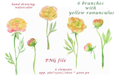 watercolor hand painted yellow ranunculus Clipart