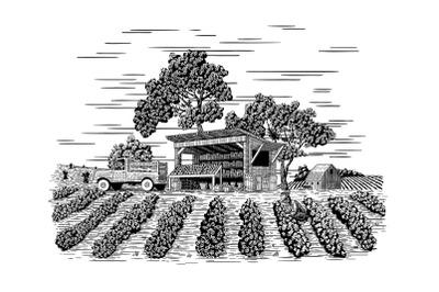 Farm Produce Stand