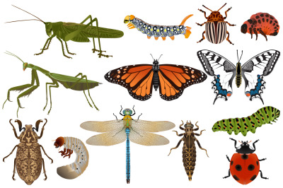 Insects colour