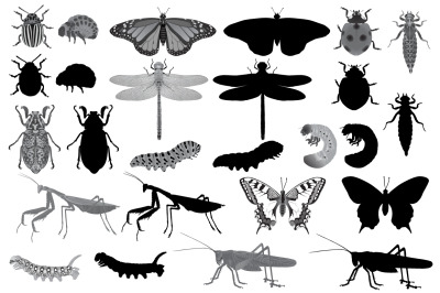 Insects silhouette and black-white
