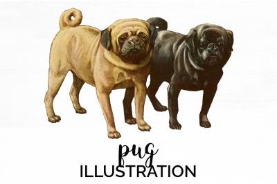 Dog Clipart Pug