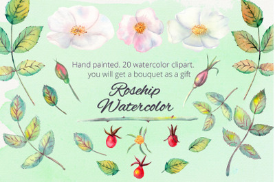 Rosehip. Watercolor clipart