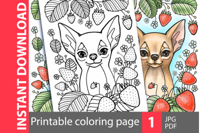 Chihuahua. Cute dog coloring page