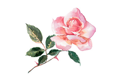 Watercolor pink rose element